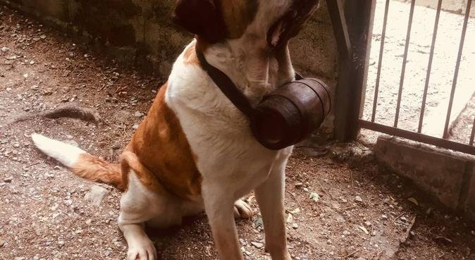 Garde ou promenade de chien, dog sitter à Annecy, France