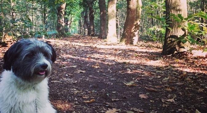Liefdevolle hondenuitlaatster!, hondenoppas in Utrecht