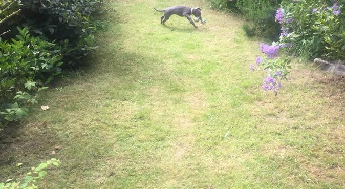 Dog boarding / sitting in South Birmingham, dog sitter in Birmingham