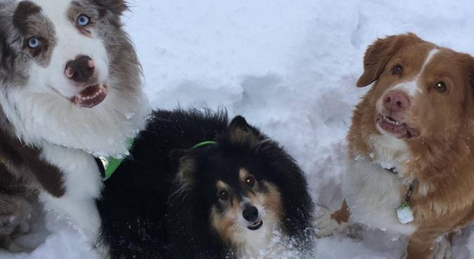 Gode turer og masse kjærlighet å gi!, hundepassere i Dal
