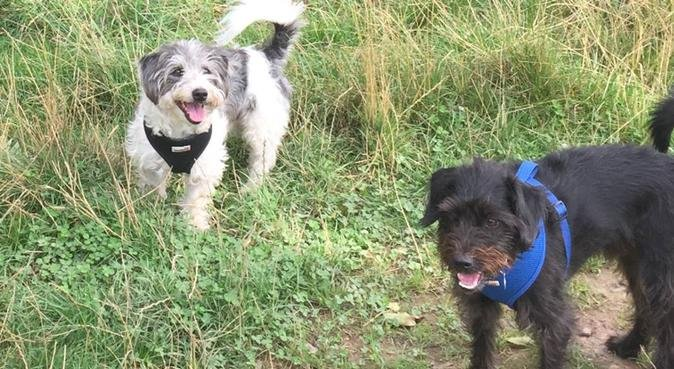 Dog day sitting and walking in/around Guildford, dog sitter in Guildford, UK