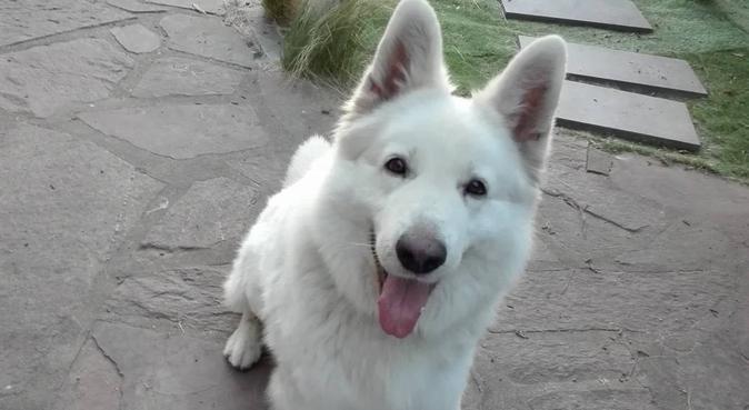 Gardes et visites à domicile, dog sitter à Angers