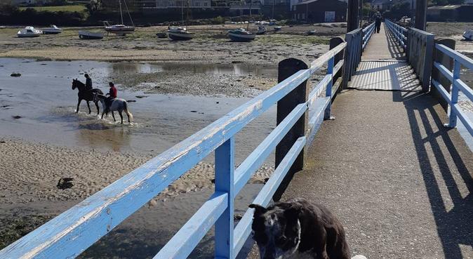 Promenade bucolique au bord de l'Odet assuré !, dog sitter à Quimper, France