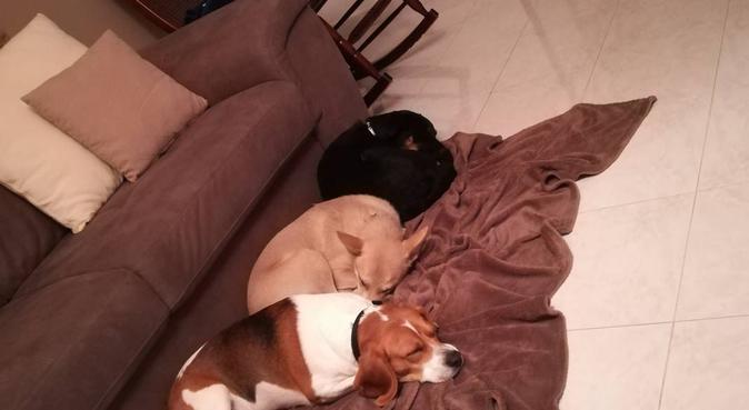 Passeggiate e non solo con amico dei cani. 🐺, dog sitter a Bari, BA, Italia