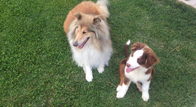 L'amie des betes, dog sitter à Marseille