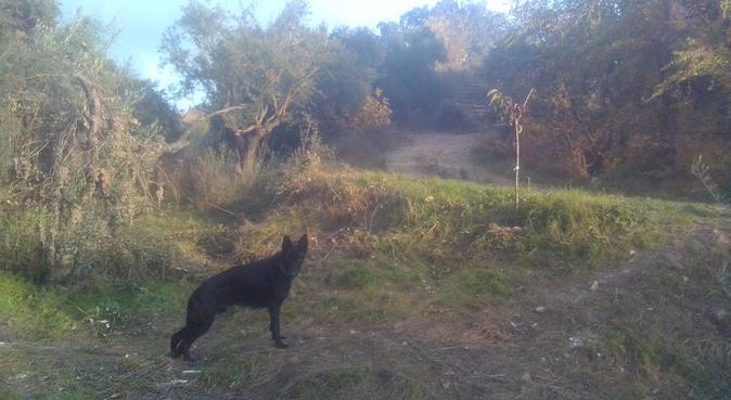 Casita de campo con gran finca vayada, canguro en Granollers, España