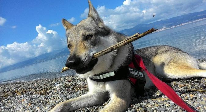 Lunghe passeggiate in mani sicure, dog sitter a Mascalucia