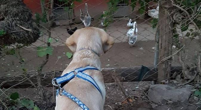 NON POSSO AVERE UN CANE MA...LI AMO., hundepassere i Roma