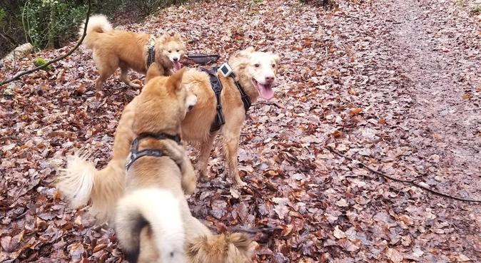 Balade bonheur de fin de journée, dog sitter à Déville-lès-Rouen, France