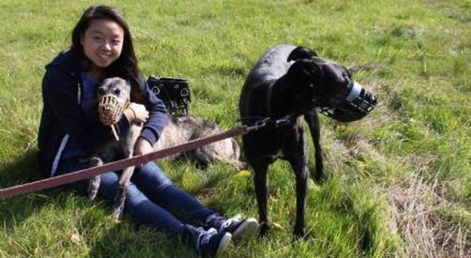 Experience dog sitter with big garden, dog sitter in ABINGDON