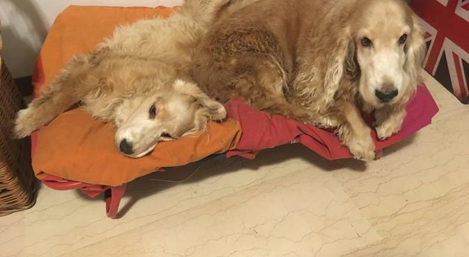 Una dog sitter per tutti i giorni e tutte le razze, dog sitter a Milano