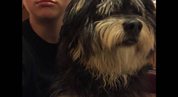 Coccole, giochi e passeggiate con i nostri amici, dog sitter a Roma