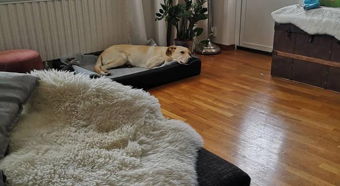 Flexibel hundpassning för dina behov, hundvakt nära Malmö