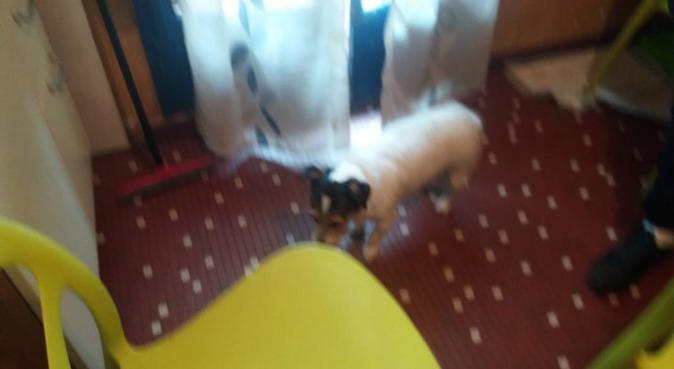coccole amore e famiglia, dog sitter a Milano