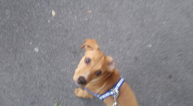 tanta passione e tanto amore per i cani, dog sitter a Roma