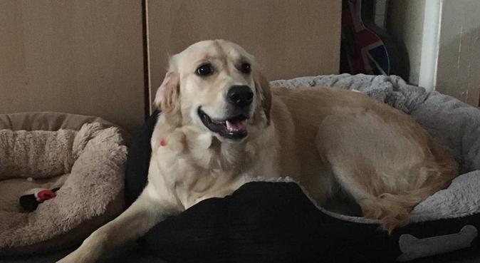 Dog cuddles and Playtime in Wolverhampton, dog sitter in Wolverhampton, UK