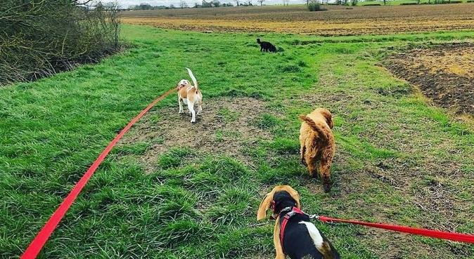 Dog walking in Colchester, dog sitter in Colchester