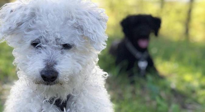 Kärleksfull hundpassning i Jönköping, hundvakt nära Jönköping, Sverige