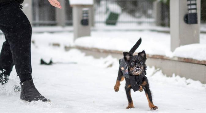 Någon som vill byta hundvaktstjänst?, hundvakt nära Hägersten