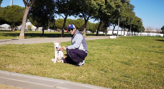 La casa de los perros, canguro en Sevilla, España
