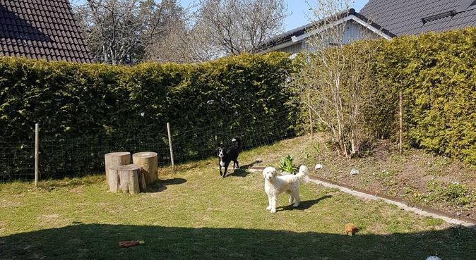 Mycket kärlek och långa promenader i naturen, hundvakt nära Hässelby
