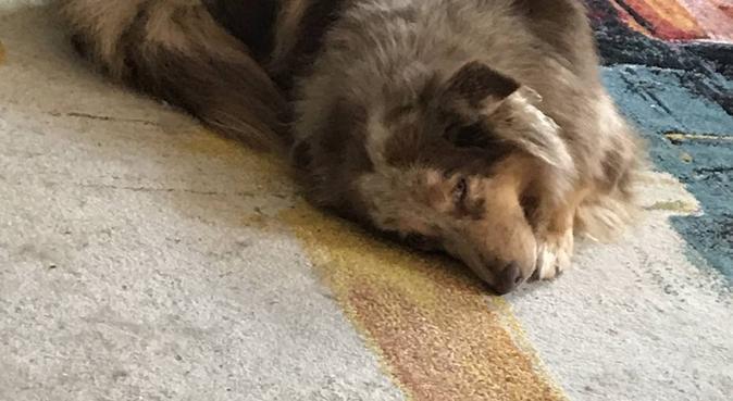 Une nounou pour votre Loulou, dog sitter à Meylan, France
