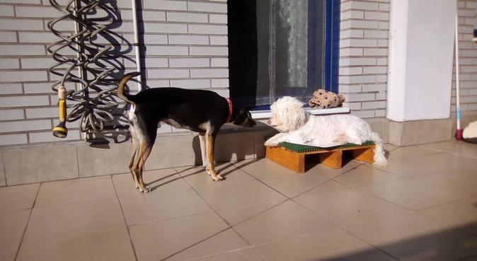 Happy Dog paseos y cuidados cualquier día del año, canguro en Gijón, España