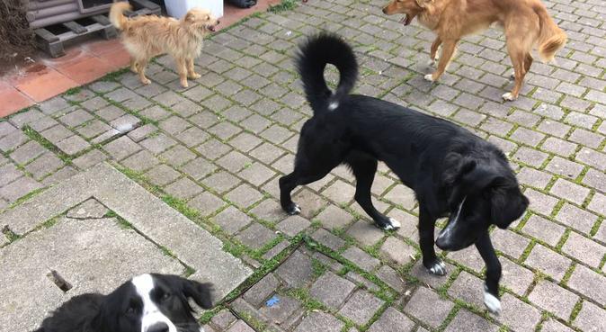 Dog sitter con esperienza, dog sitter a Lucca