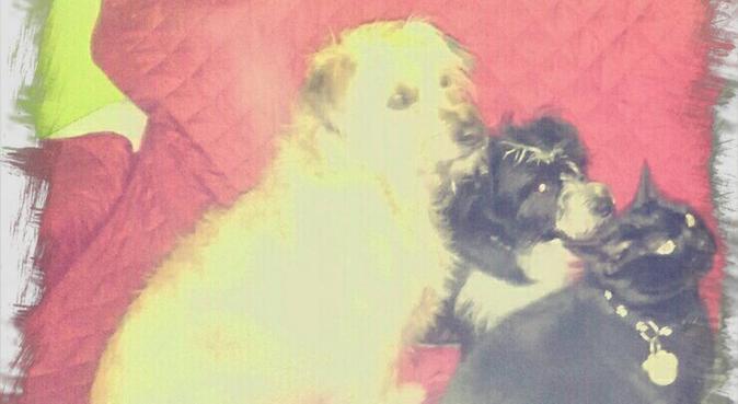 Casita acogedora para perros y gatos., canguro en Vigo