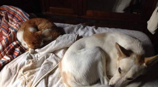 Coccole e tante passeggiate!, dog sitter a Milano