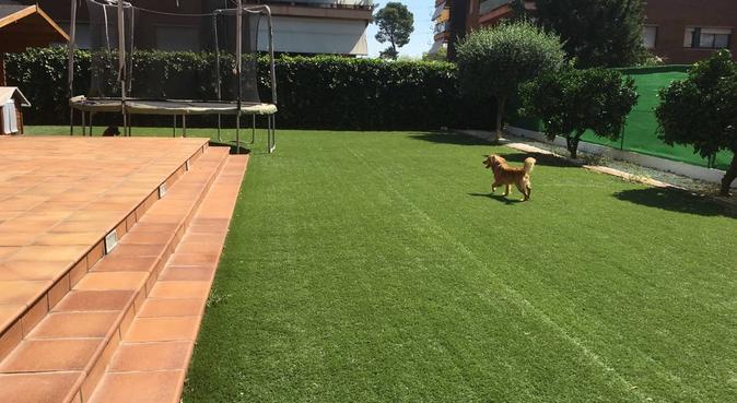 Vacaciones de 10 para tu perro!, canguro en Castelldefels