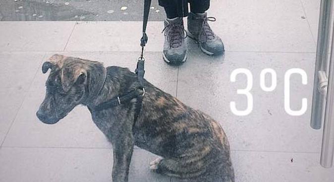 Forever Dog Lover, hundvakt nära Huddinge, Sweden