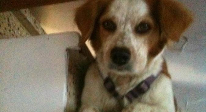 les sorties avec bibi : ça a du chien !, dog sitter à Montpellier, France