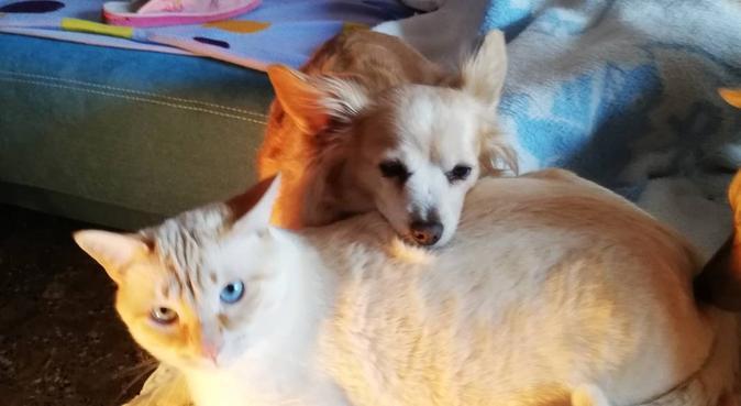 Alojamiento temporal para perros y gatos, canguro en Almería, España