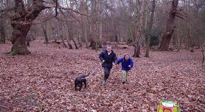 ***** Doggy Sleepovers in Chestnuts, dog sitter in Essex