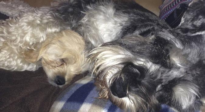 Need a last minute dog walker in Leeds?, dog sitter in Leeds