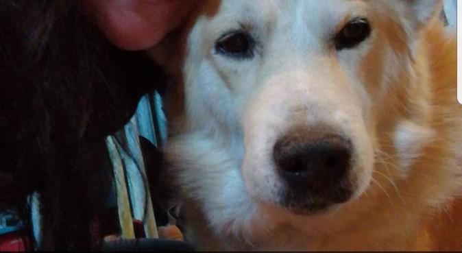 2 glada elitskidåkare som älskar hundar!, hundvakt nära Östersund