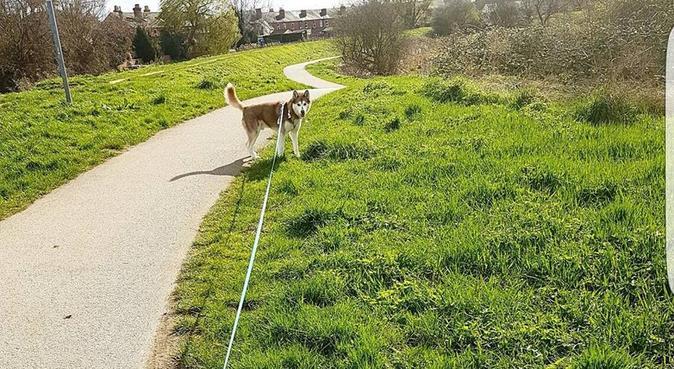 Dog Walker!, dog sitter in Lincoln