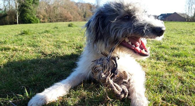 Standish Lowerground Dogwalking Service, dog sitter in London
