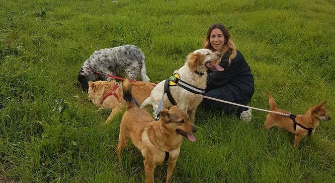 Momenti amorevoli insieme 🐶, dog sitter a BOLOGNA