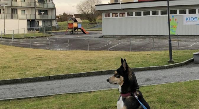 Der det er hjerterom er det alltid plass❤, hundepassere i Loddefjord