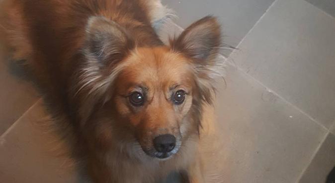 Kärleksfull hundpassning i Kumla, hundvakt nära Kumla