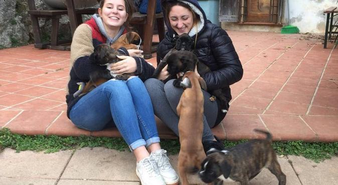 Passeggiate e coccole assicurate, dog sitter a Padova, PD, Italia