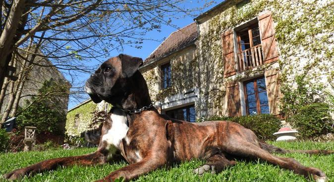 La câlineuse de Lille, dog sitter à Lille