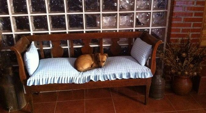 La mejor compañía para tus perros!!, canguro en Santurce