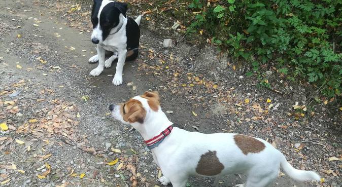 Divertimento coccole e tante passeggiate, dog sitter a Genova