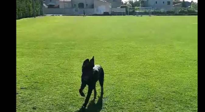Je vous aide dans votre quotidien !, dog sitter à Avignon