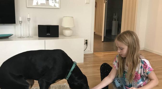 Trygg och kärleksfull hundpassare, hundvakt nära Sollentuna, Sverige