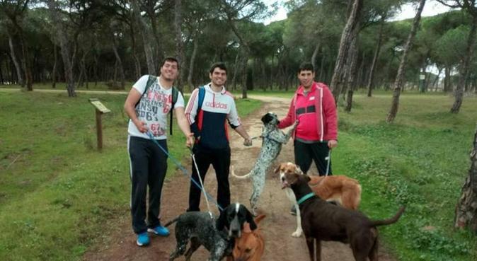 Paseante canino, se hace camino al andar, canguro en Paracuellos De Jarama