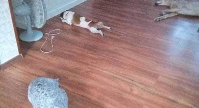 Amore,coccole,passeggiate gioco con Rossana, dog sitter a Bergamo